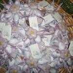 portaconfetti lilla sunn + magnete
